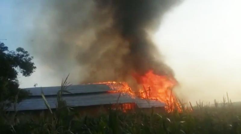 Kandang Ternak Terbakar, Ribuan Ayam Mati Terpanggang