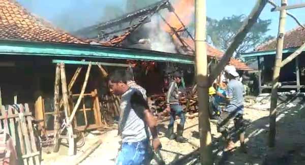 Diduga Korsleting Listrik, Rumah dan Kandang Pak Museri Ludes Dilalap Api