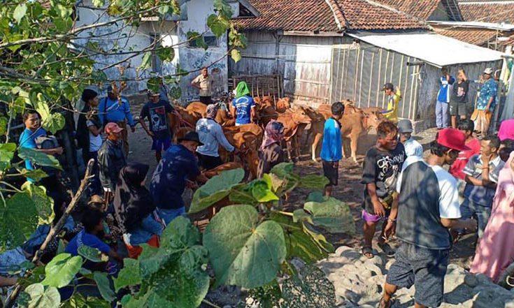 Jelang Iduladha, Pengiriman Sapi Madura ke Probolinggo Malah Turun