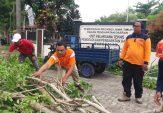 Pasca Angin Kencang Melanda Daerah Bangkalan, BPBD Cek Beberapa Pohon yang Berpotensi Tumbang
